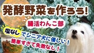 Fermented_Vegetable-022321-300x169-magazine-min.jpg