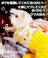 chibimaru-110719-1-compressor.jpg