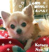 kotaro-112618-2-compressor.jpg