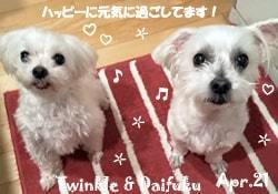 poko_maru-twinkle_daifuku-042521-min.jpg