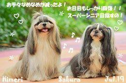 sakura_himeri-070519-compressor.jpg