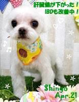 shingo-050121-min.jpg