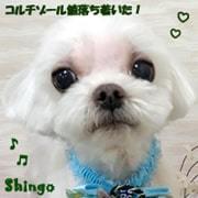 shingo-ml-040421-min.jpg