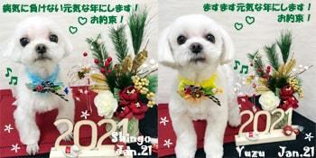 shingo_yuzu-013121-min.jpg