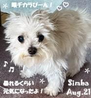 simba-082221-min.jpg