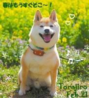 torajiro-022321-min.jpg