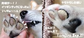 torajiro-091021-paw-min.jpg