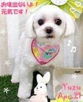 yuzu-050121-min.jpg