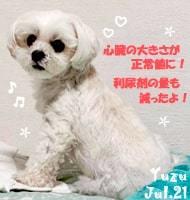 yuzu-072821-min.JPG