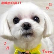 yuzu-ml-040421-min.jpg